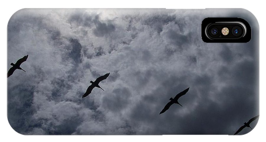 Pelicans IPhone X / XS Case featuring the photograph Pelican Sky by J Leigh