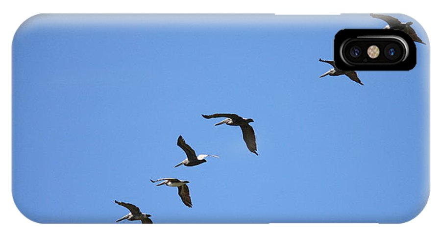 Pelicans IPhone X Case featuring the photograph Pelicans All In A Row by Carol Groenen