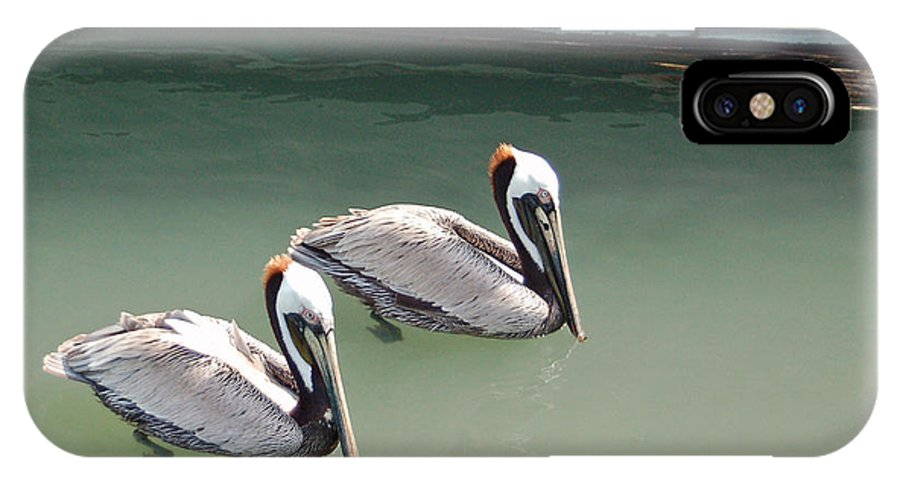 Brown Pelican IPhone Case featuring the photograph Pelicans Partners by Suzanne Gaff