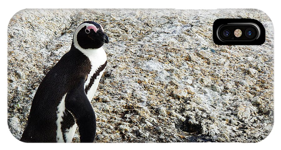 Photography IPhone X Case featuring the photograph Penguin Chilling On Rock At Boulders Beach Cape Town by Charl Bruwer