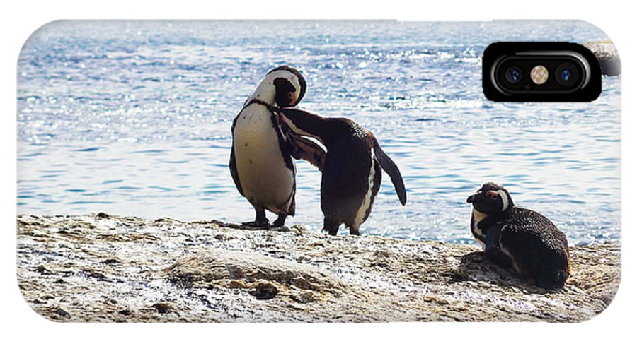 Photography IPhone X Case featuring the photograph Penguins Kissing At Boulders Beach Cape Town by Charl Bruwer
