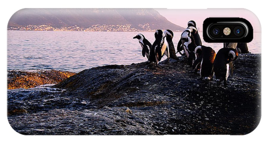 Photography IPhone X Case featuring the photograph Penguins Mountain Boulders Beach Cape Town by Charl Bruwer