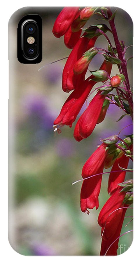 Flowers IPhone X Case featuring the photograph Penstemon by Kathy McClure