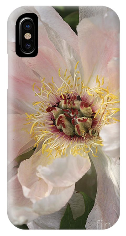 Flower IPhone X Case featuring the photograph Peonie In Soft Pink by Deborah Benoit