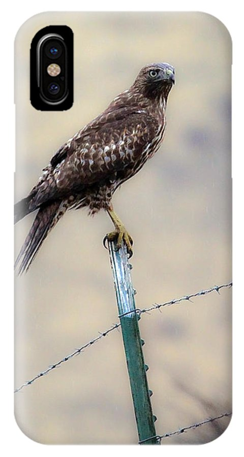 Redtail Hawk IPhone X Case featuring the photograph Perched Above by Steve McKinzie