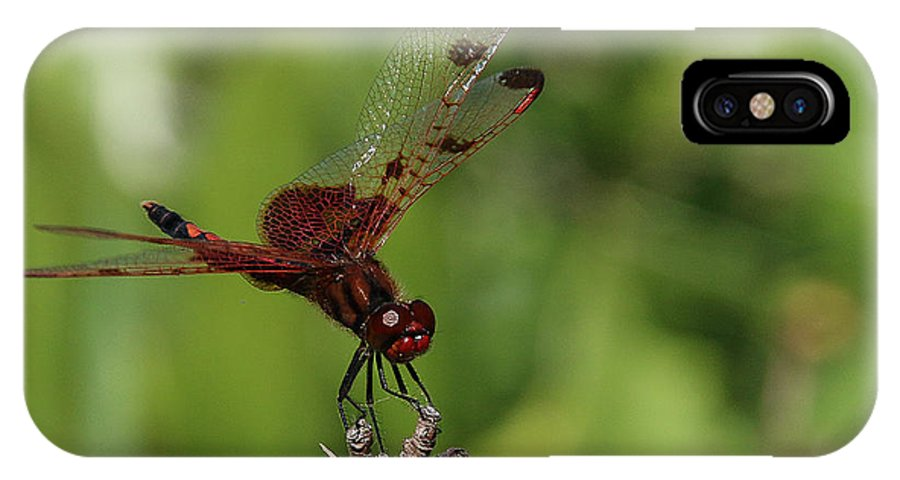 Dragonfly IPhone X Case featuring the photograph Perched by Christine Nunes