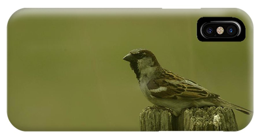 Birds IPhone X Case featuring the photograph Perched On A Fence Post by Jeff Swan