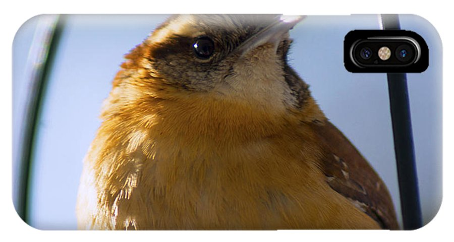 Bird IPhone X Case featuring the photograph Perched Portrait by Joe Geraci