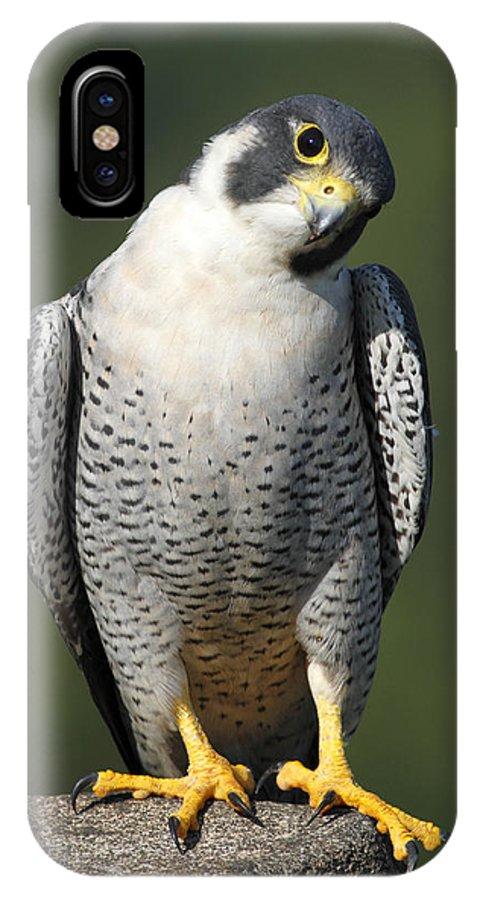Bird IPhone X Case featuring the photograph Peregrine Gaze by Steven Sachs
