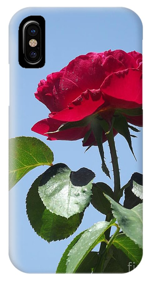 Huntington Library IPhone X Case featuring the photograph Perfect Red Rose by Cheryl Hardt Art
