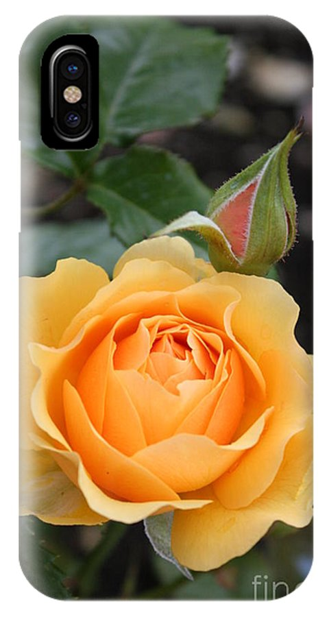 Rose IPhone X Case featuring the photograph Perfect Rose by Christiane Schulze Art And Photography