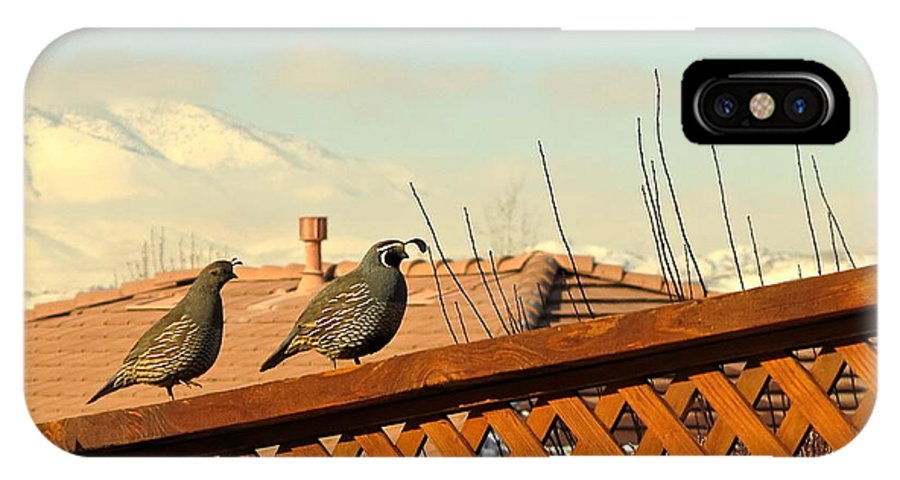 Quail IPhone X Case featuring the painting Perky Quail And Snow On Peavine Mountain by Phyllis Kaltenbach