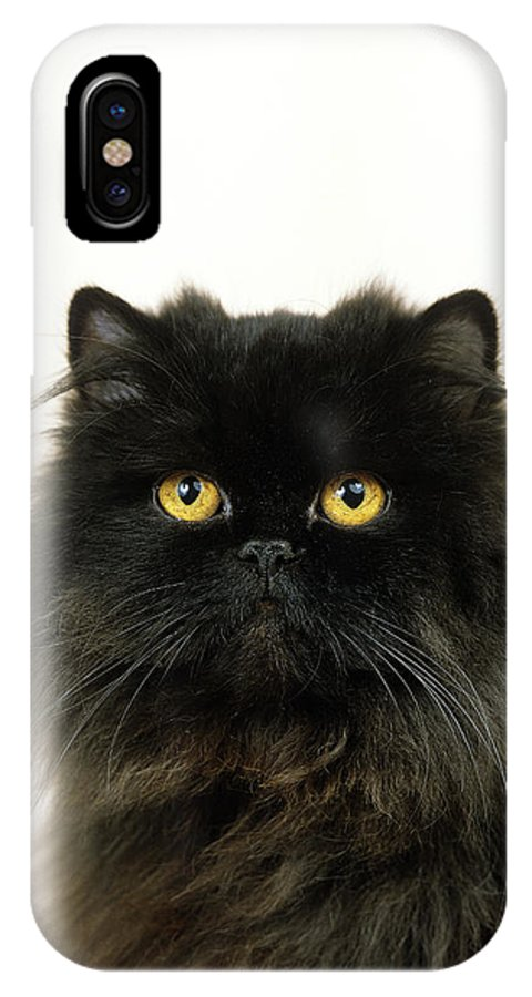 Adult IPhone X Case featuring the photograph Persan Noir by Gerard Lacz