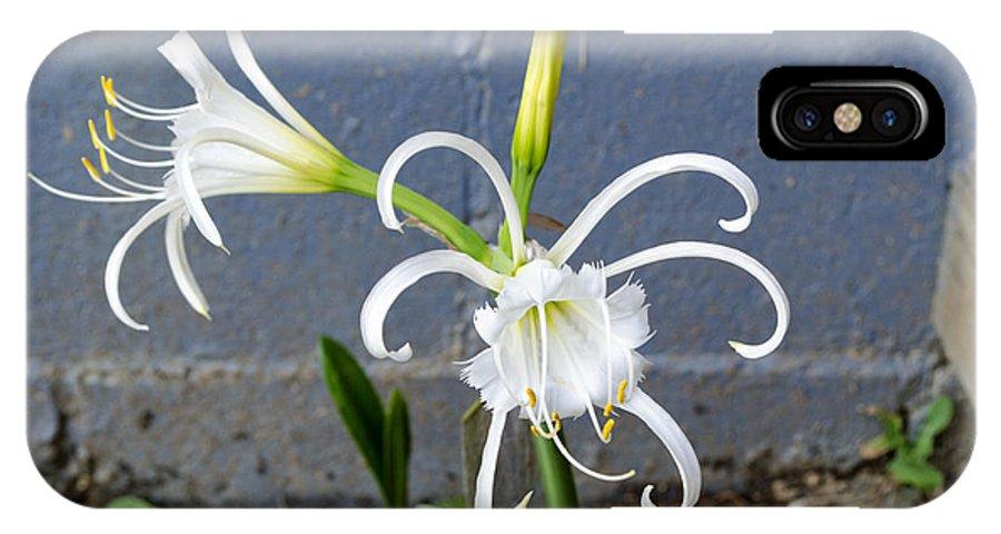 Peruvian Daffodils IPhone X Case featuring the photograph Peruvian Gals by Christina Perrotti