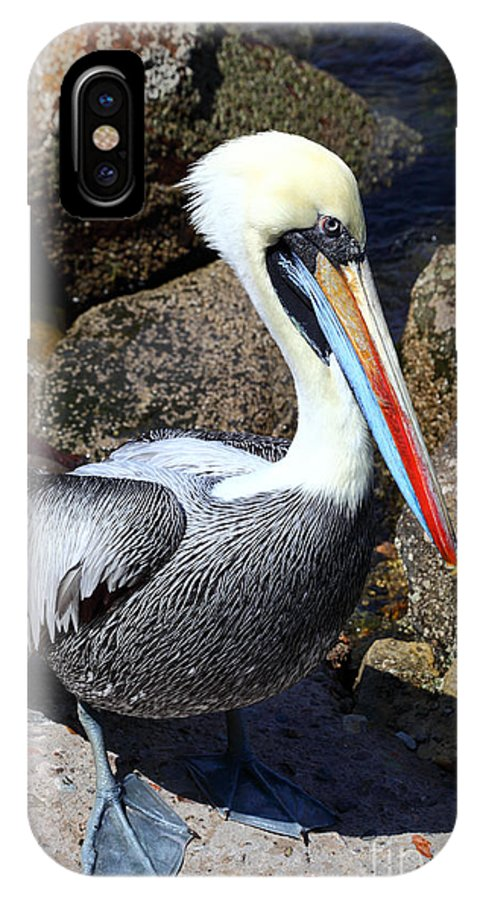 Pelican IPhone X Case featuring the photograph Peruvian Pelican by James Brunker