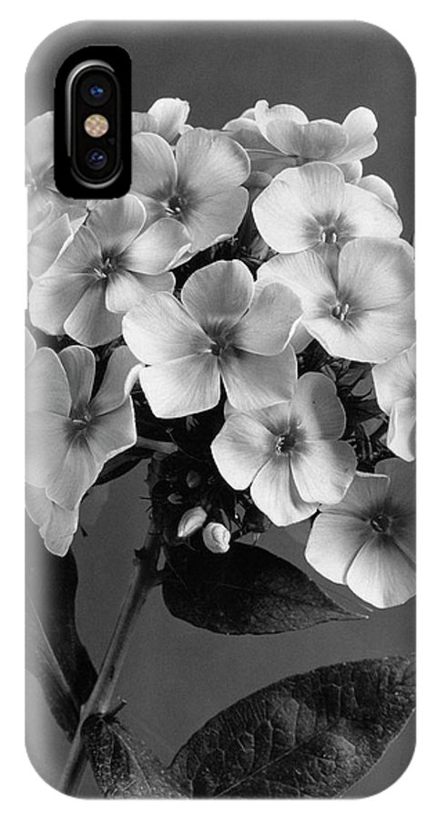 Flowers IPhone X Case featuring the photograph Phlox Blossoms by J. Horace McFarland