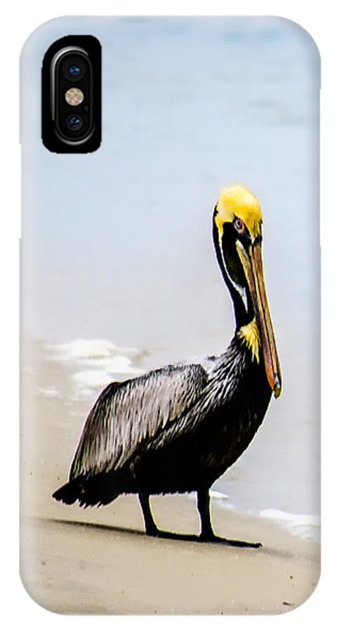 Brown Pelican IPhone X Case featuring the photograph Phone Case Matanzas Pelican by Debi and Grant McManus