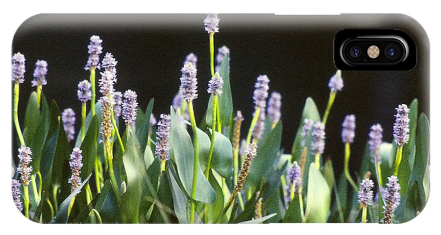 Aquatic Plant IPhone X Case featuring the photograph Pickerel Weed by Brian Lucia