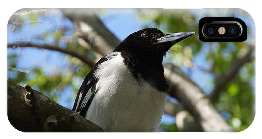 Pied Butcher Bird IPhone X Case featuring the photograph Pied Butcher Bird by Dani Katz