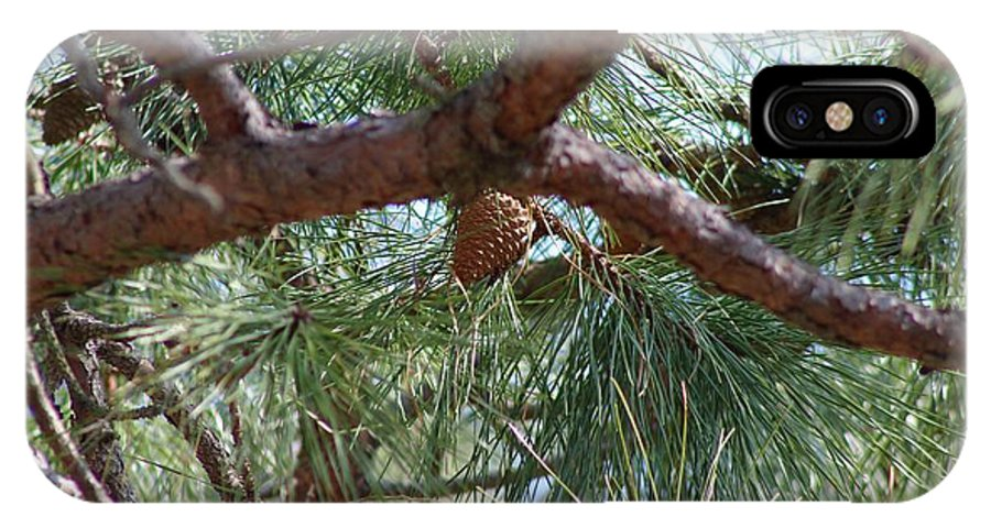 Pine IPhone X Case featuring the photograph Pine Tree by Nance Larson