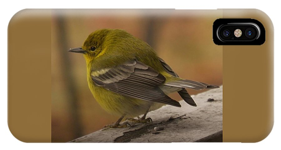 Bird IPhone X Case featuring the photograph Pine Warbler by Earl Williams Jr