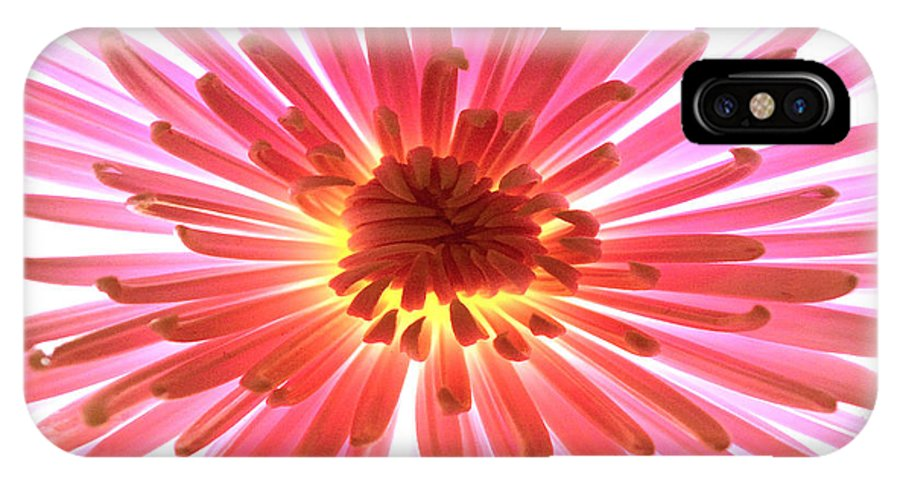 Original Photo IPhone X Case featuring the photograph Pink Burst by Sherry Allen