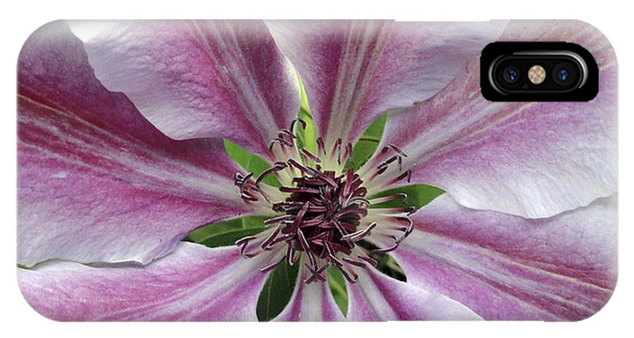 Pink IPhone X Case featuring the photograph Pink Clematis by Wendy Raatz Photography