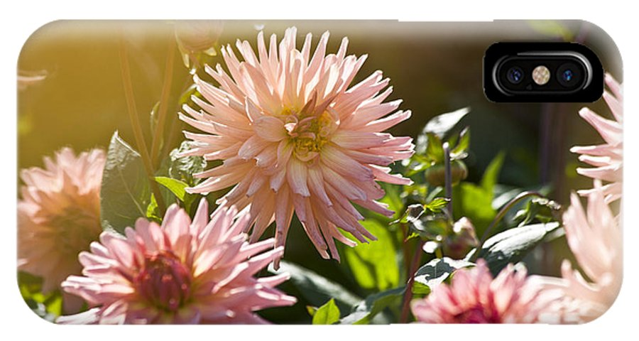 Heiko IPhone X Case featuring the photograph Pink Dahlia Garden by Heiko Koehrer-Wagner