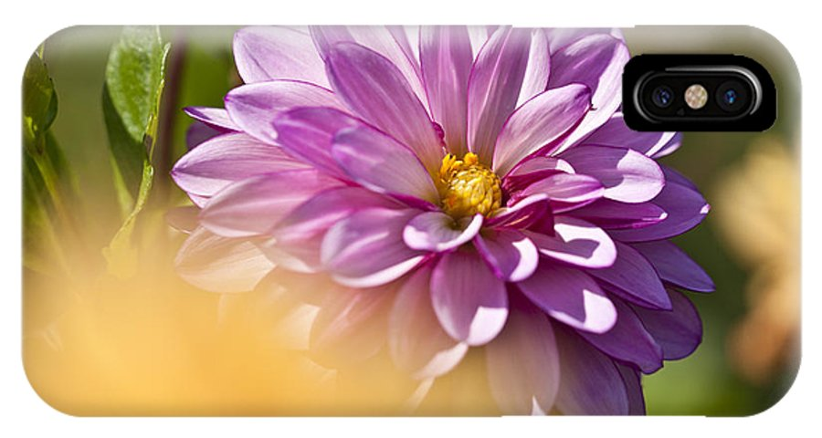 Heiko IPhone X Case featuring the photograph Pink Dahlia by Heiko Koehrer-Wagner