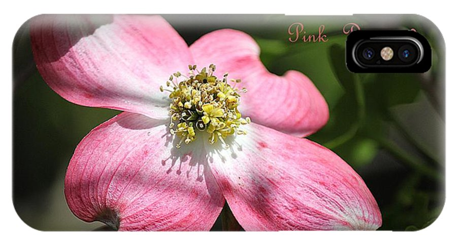 Dogwood IPhone X Case featuring the photograph Pink Dogwood by Sharon Johnston