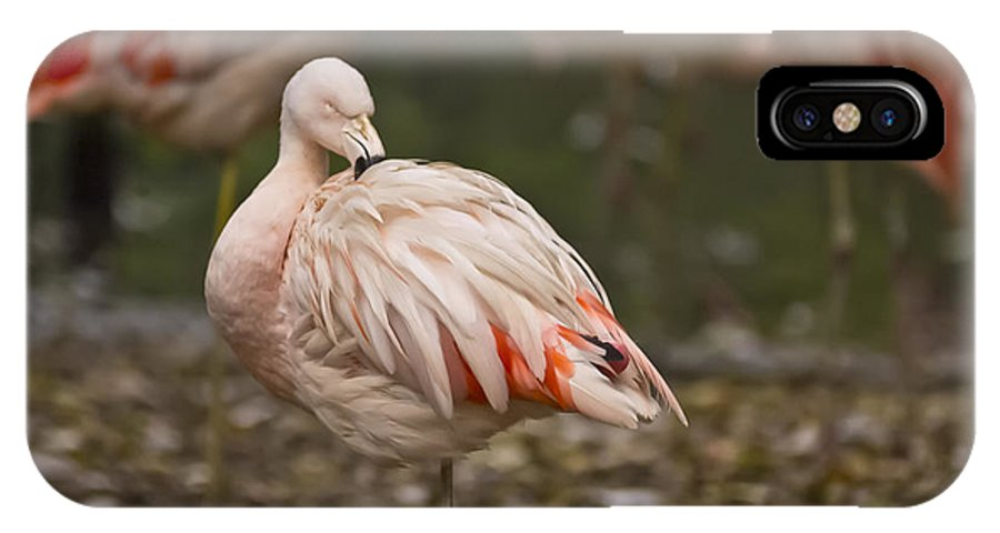 Pink Flamingo IPhone X Case featuring the photograph Pink Flamingo by Jason Abston