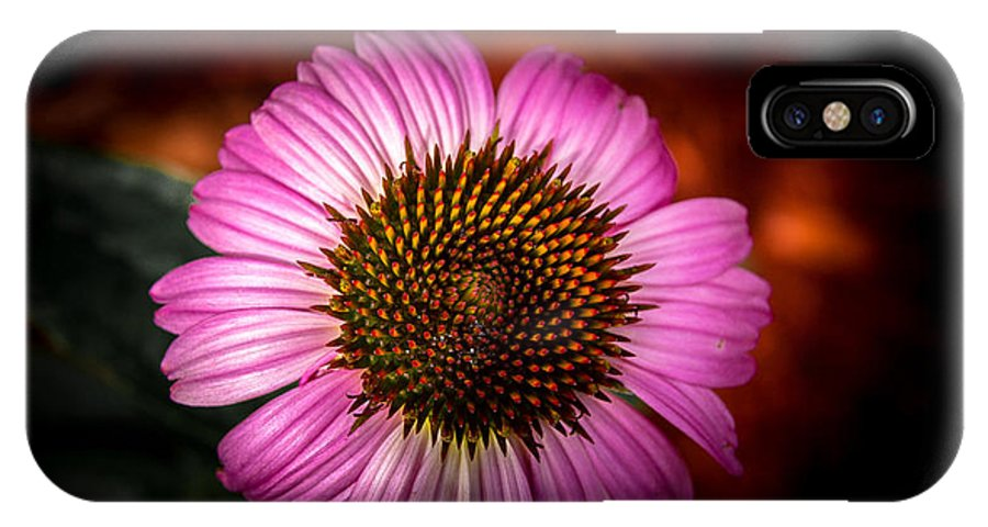 Flowers IPhone X Case featuring the photograph Pink Flower Blooming by Jason Picard