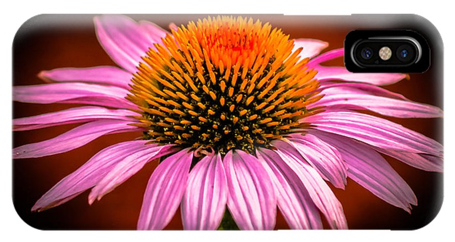 Flowers IPhone X Case featuring the photograph Pink Flower by Jason Picard