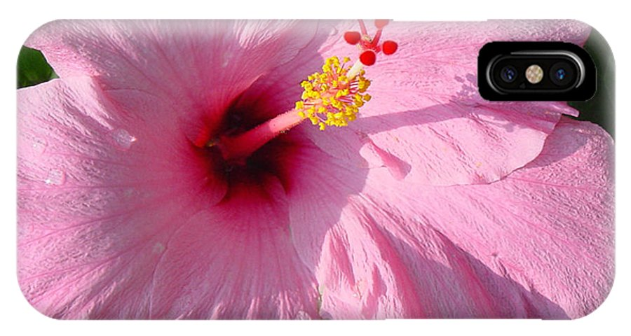 Pink Hibiscus IPhone X Case featuring the photograph Pink Hibiscus by Suzanne Gaff