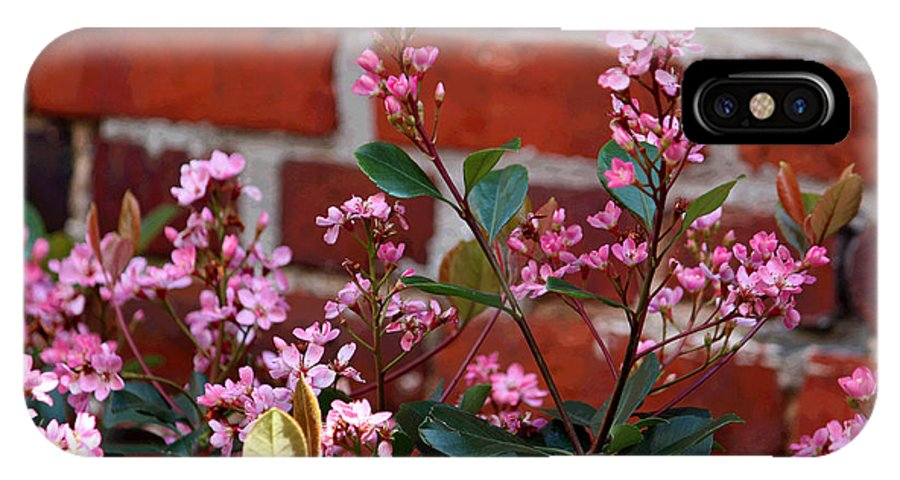 Digital Art IPhone X Case featuring the photograph Pink Indian Hawthorne by Suzanne Gaff