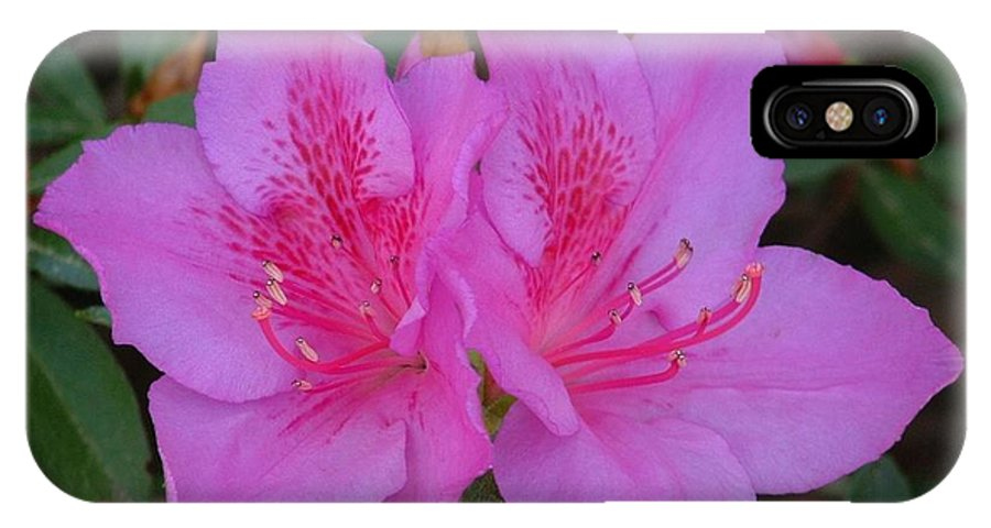 Flowers IPhone X Case featuring the photograph Pink Ladies by Lorna Hooper