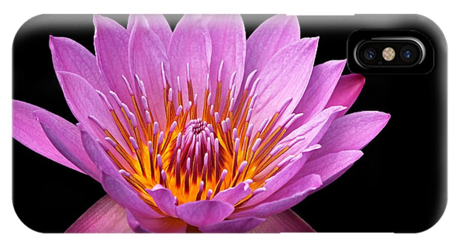 Water Lily IPhone X Case featuring the photograph Pink Lady On Black by Judy Vincent
