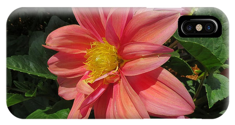 Flower IPhone X Case featuring the photograph Pink Orange Center Flower by Bill Marder
