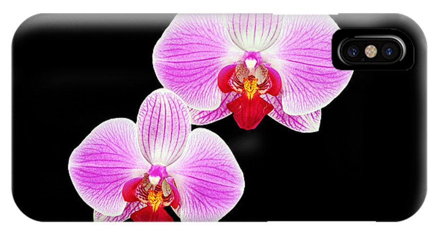 Background IPhone X Case featuring the photograph Pink Orchid by Boyd E Van der Laan
