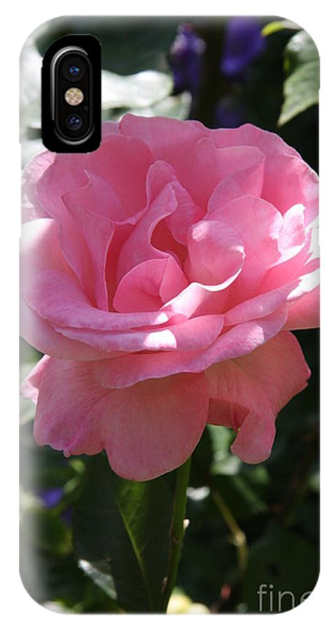Rose IPhone X Case featuring the photograph Pink Rose by Christiane Schulze Art And Photography