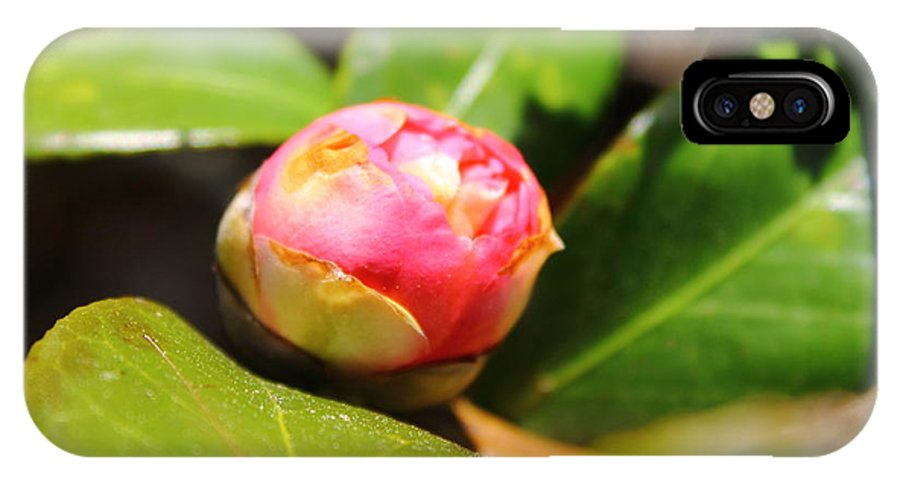 Pink IPhone X Case featuring the photograph Pink Rosebud by Mary Koval