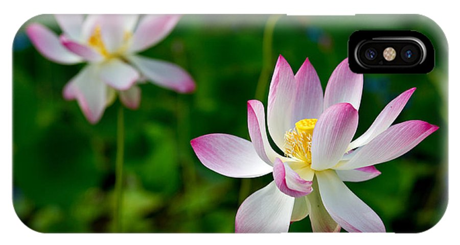 Lotus IPhone X Case featuring the photograph Pink Sacred Lotus by Mark Skalny