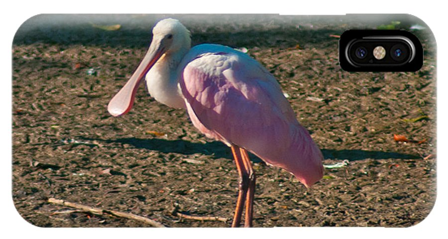 Spoonbill IPhone X Case featuring the photograph Pink Spoonbill In The Sun by Stephen Whalen