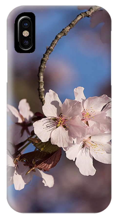 Pink Spring IPhone X Case featuring the photograph Pink Spring - Sunlit Blossoms And Blue Sky - Vertical by Georgia Mizuleva