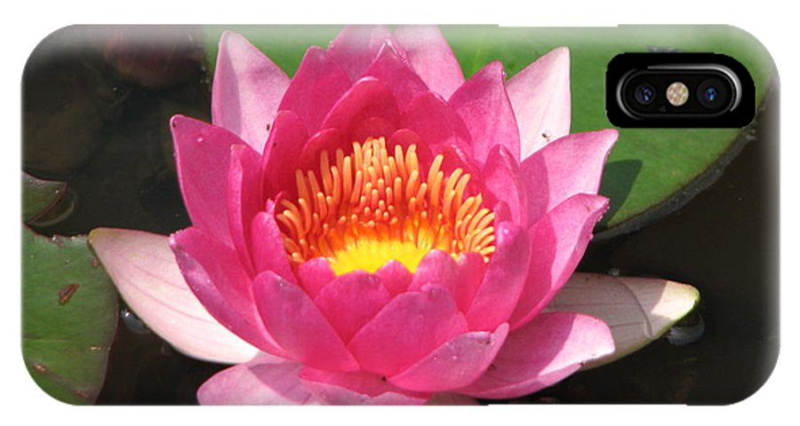 Pink IPhone X Case featuring the photograph Pink Water Lilly by Janine Connolly