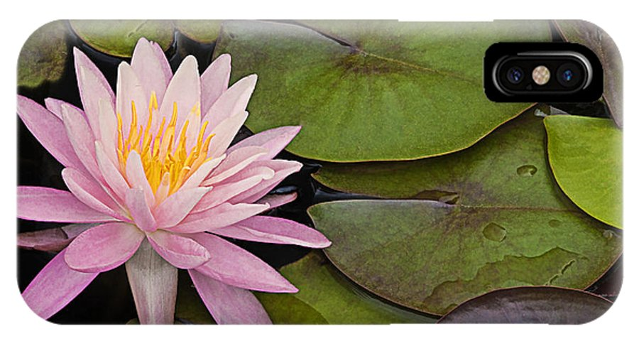 Plant IPhone X Case featuring the photograph Pink Water Lily by Linda D Lester