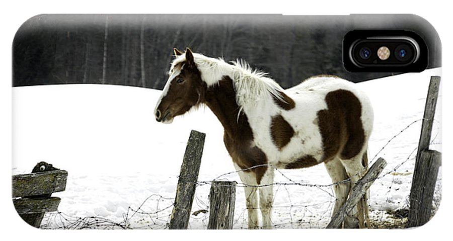 Horse IPhone X Case featuring the photograph Pinto by Lisa Bryant