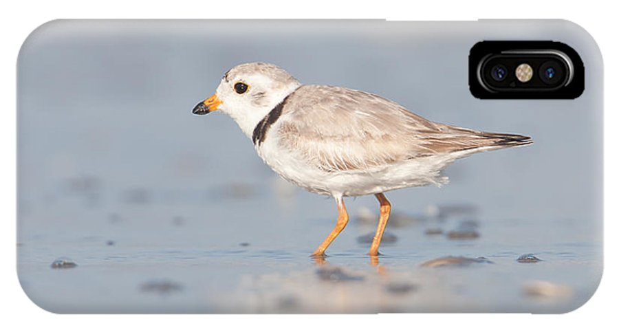 Clarence Holmes IPhone X Case featuring the photograph Piping Plover II by Clarence Holmes