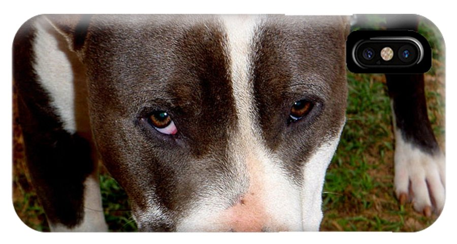 Brown IPhone X Case featuring the photograph Pit Bull - 2 by Mary Deal