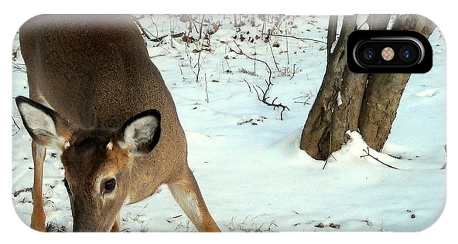Deer IPhone X Case featuring the photograph Playful In The Snow by Tami Quigley